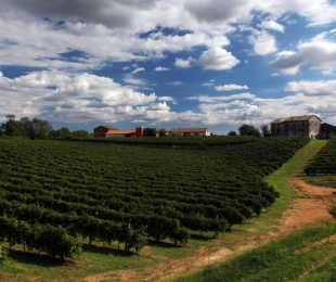 Prosecco Superiore DOCG: the long road from the vineyard to the glass. First part.
